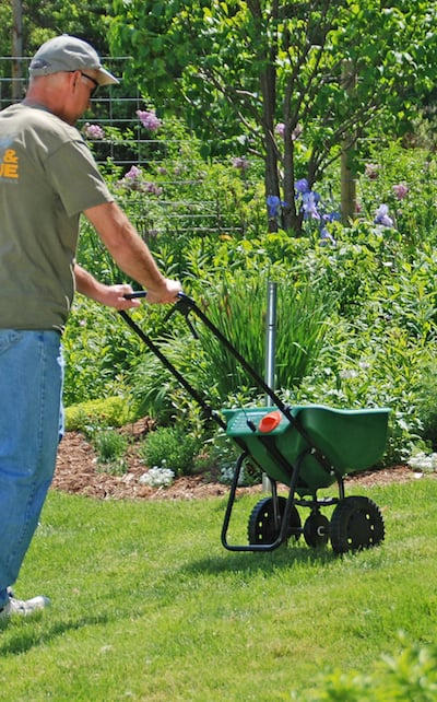 Fertilizing Lawn with Spreader