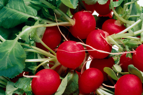 Why Radishes are the Choice for Summer!