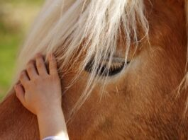 How to Introduce Your Child to Horses