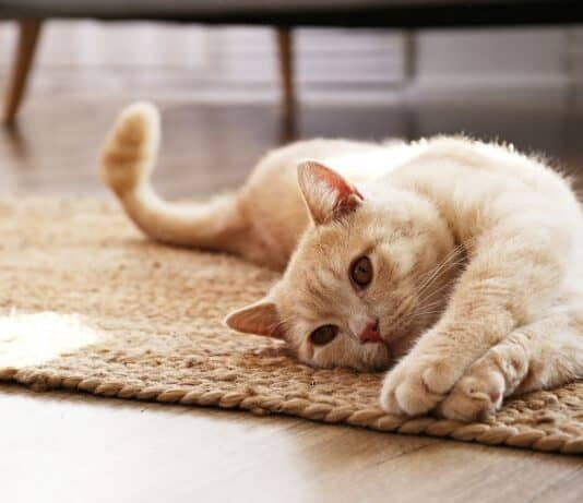 Four Purrfect Ways To Spoil Your Cat Right Meow