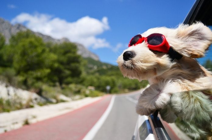 Should You Bring Your Dog Along on Vacation?