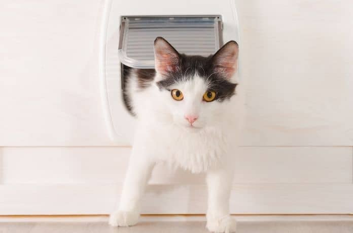 Pet Upgrades To Add to Your Home