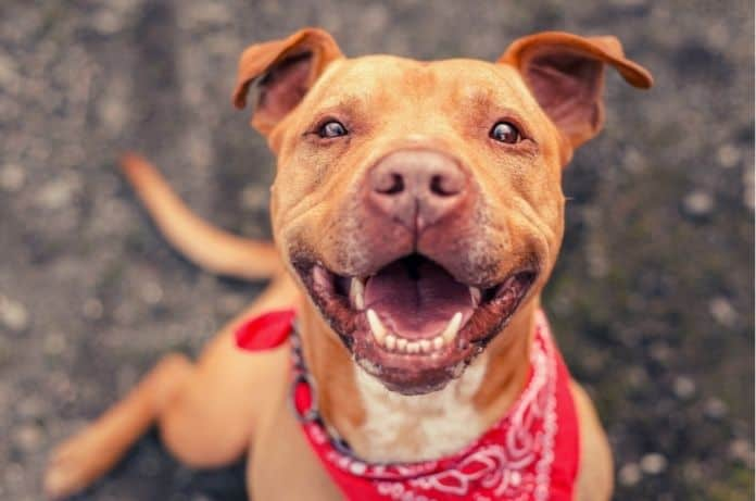 Essential Tips for Socializing a Rescue Dog